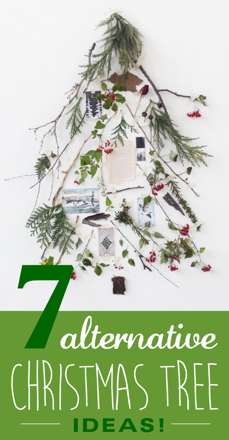 7 Alternative Christmas Trees for a Green Christmas – Dylan Drake ...