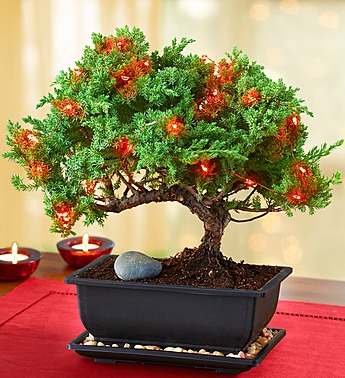 alternative_christmastree_bonsai